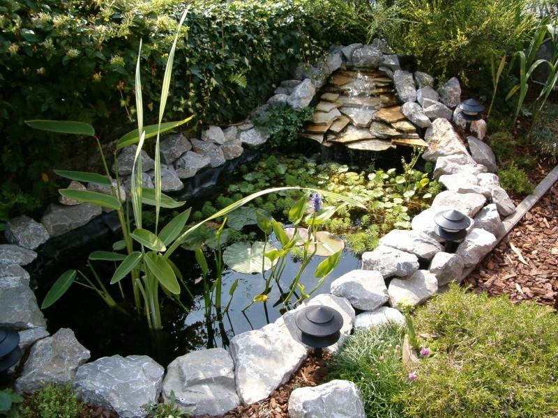 petit étang a côté du chalet... Hpim1214