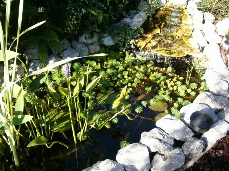 petit étang a côté du chalet... Hpim1610