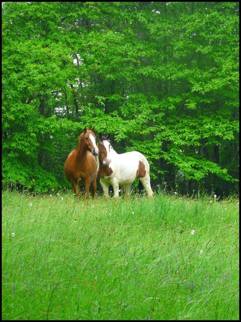 CONCOURS PHOTOS : Chevaux et nature.... P1150010