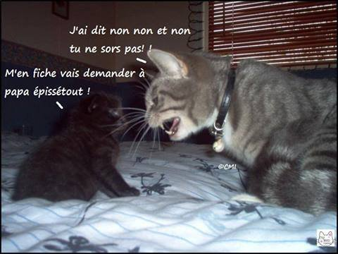 Chats alors !!! - Page 2 32273710