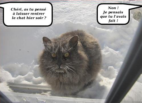 Chats alors !!! Chatre10