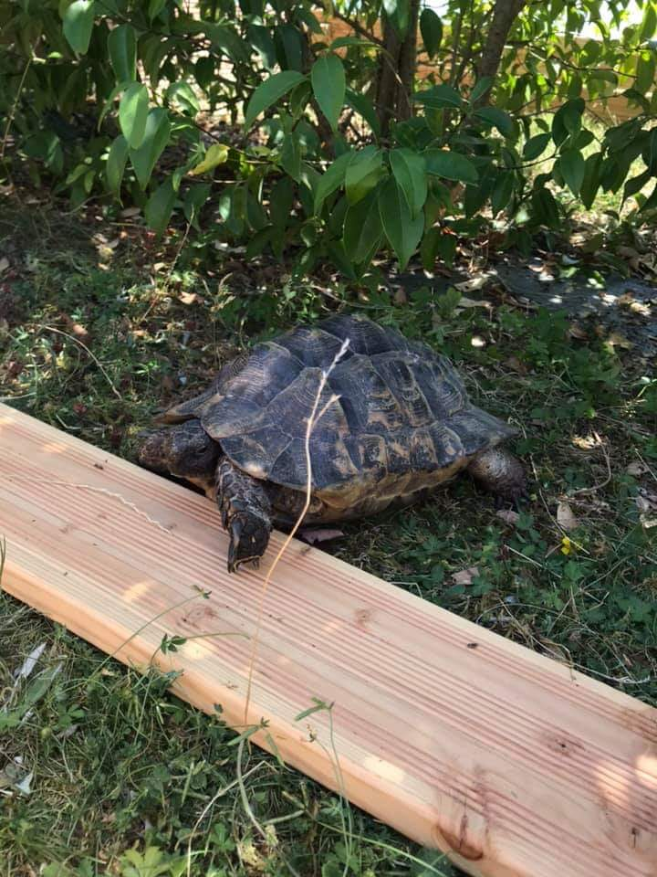 Help identification de ma tortue  Fb_img13