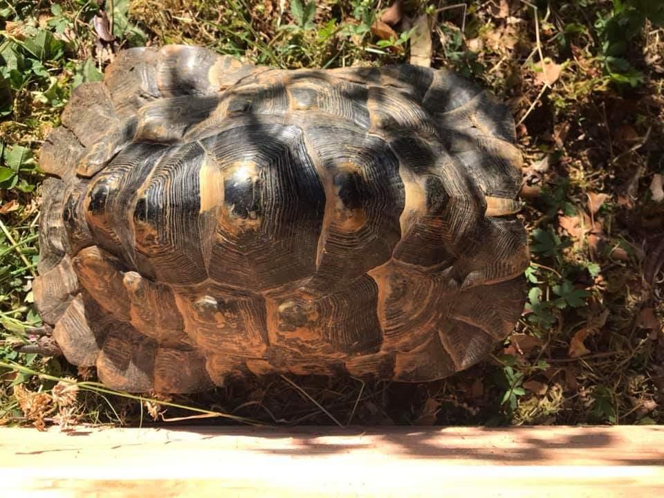 Help identification de ma tortue  Fb_img15