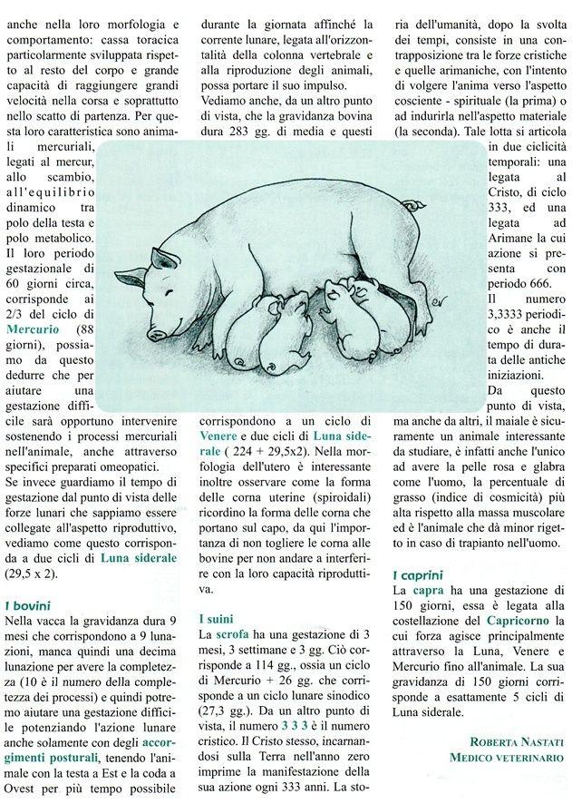 La riproduzione delle diverse specie animali di Roberta Nastati Xvdvdv10