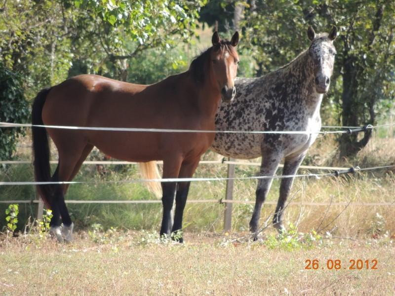 Mes chevaux, un mélange d'un peu tout le monde! 01412