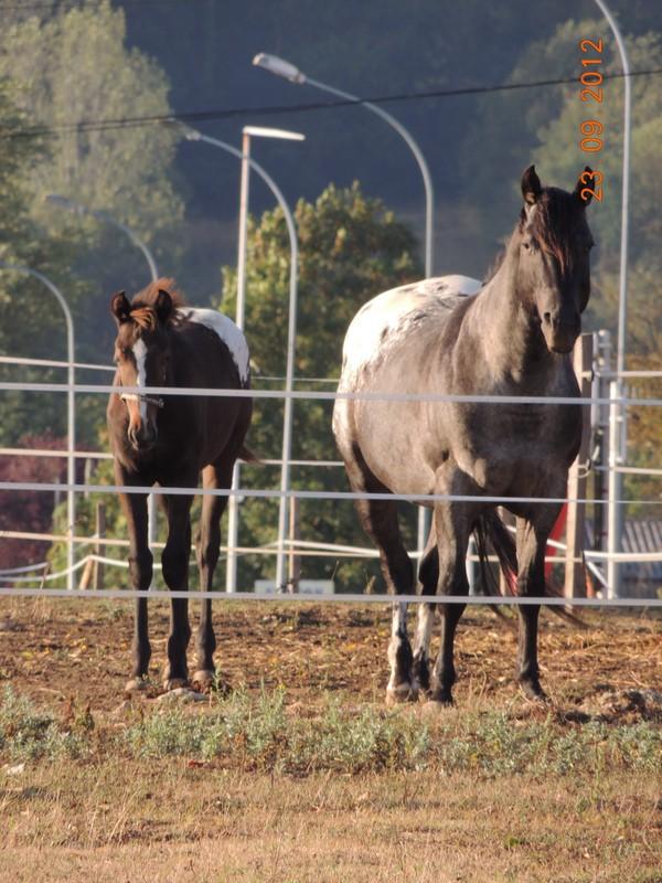 Mes chevaux, un mélange d'un peu tout le monde! 02012
