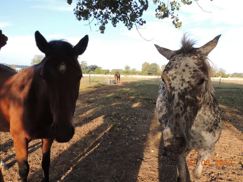 Mes chevaux, un mélange d'un peu tout le monde! 03511