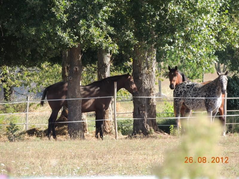 Mes chevaux, un mélange d'un peu tout le monde! 07110