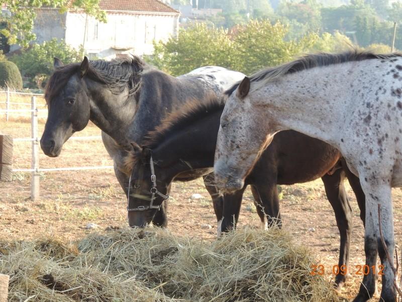 Mes chevaux, un mélange d'un peu tout le monde! 07710