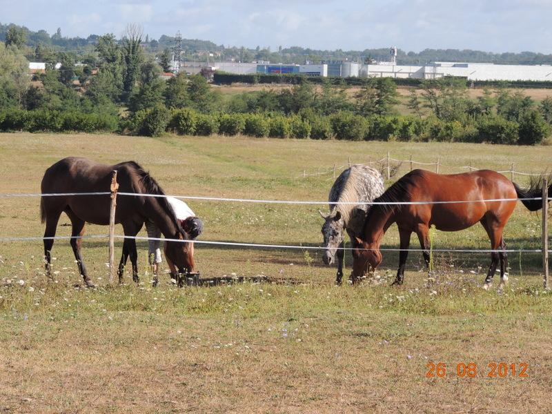 Mes chevaux, un mélange d'un peu tout le monde! 11610