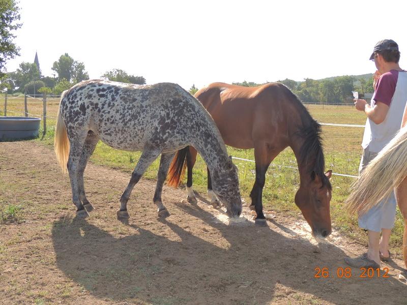 Mes chevaux, un mélange d'un peu tout le monde! 12110