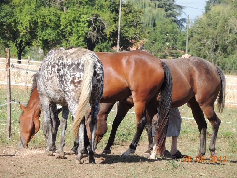 Mes chevaux, un mélange d'un peu tout le monde! 14410