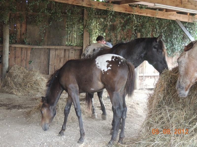 Mes chevaux, un mélange d'un peu tout le monde! Campbe10
