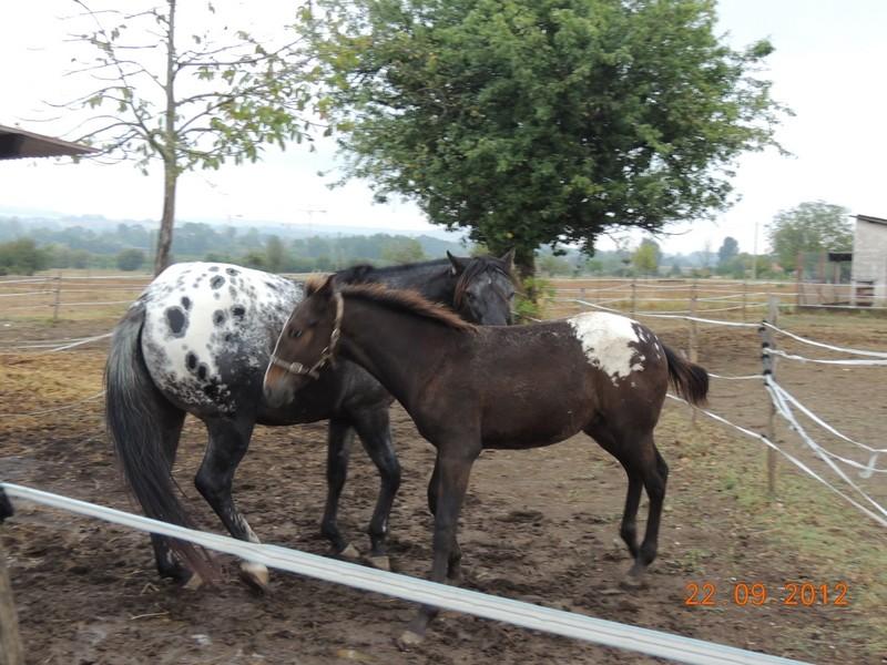 Mes chevaux, un mélange d'un peu tout le monde! Campbe19