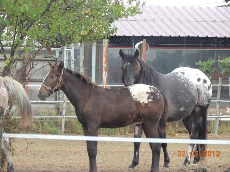 Mes chevaux, un mélange d'un peu tout le monde! Campbe20