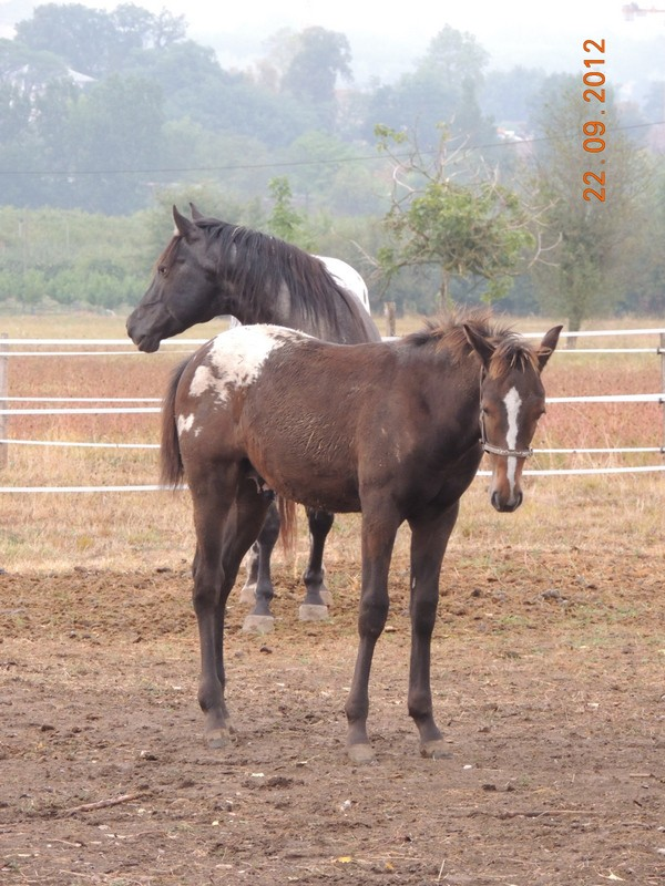 Mes chevaux, un mélange d'un peu tout le monde! Campbe21