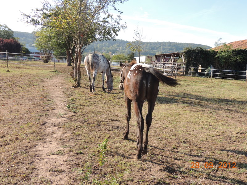Mes chevaux, un mélange d'un peu tout le monde! Campbe31