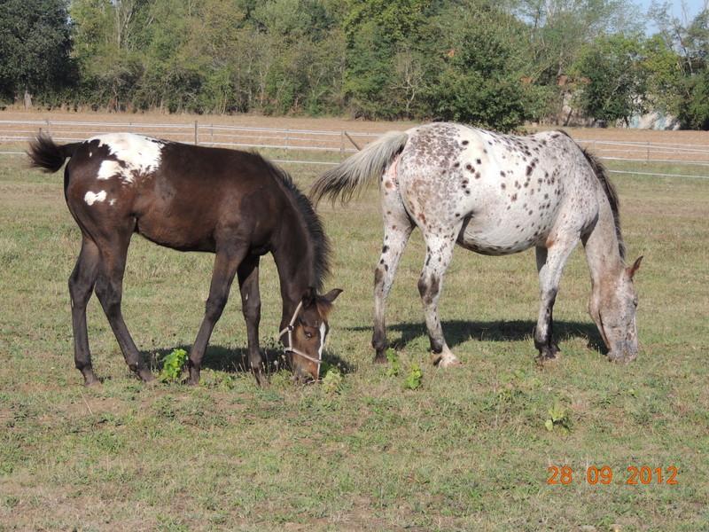 Mes chevaux, un mélange d'un peu tout le monde! Campbe32