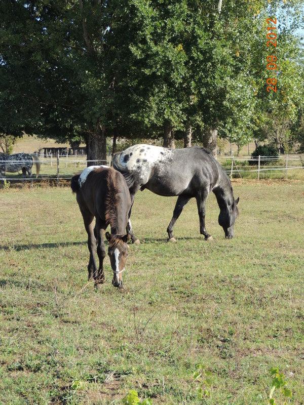 Mes chevaux, un mélange d'un peu tout le monde! Campbe34