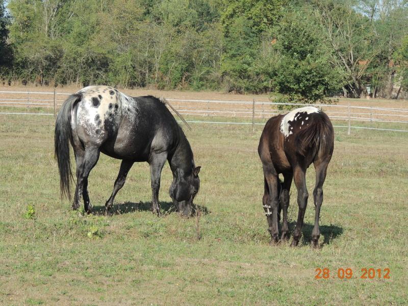 Mes chevaux, un mélange d'un peu tout le monde! Campbe36