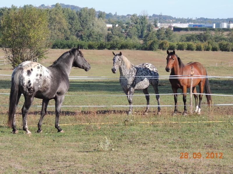 Mes chevaux, un mélange d'un peu tout le monde! Groupa10