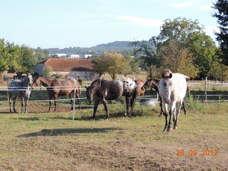 Mes chevaux, un mélange d'un peu tout le monde! Groupa11