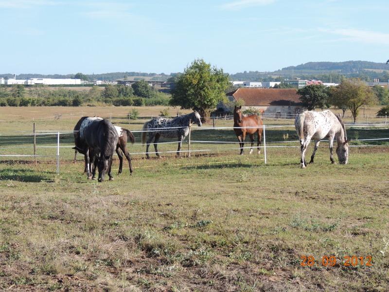 Mes chevaux, un mélange d'un peu tout le monde! Groupa12