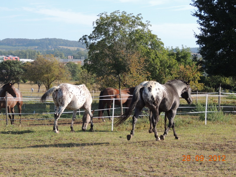 Mes chevaux, un mélange d'un peu tout le monde! Groupa13