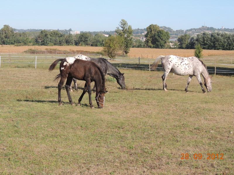 Mes chevaux, un mélange d'un peu tout le monde! Groupa14