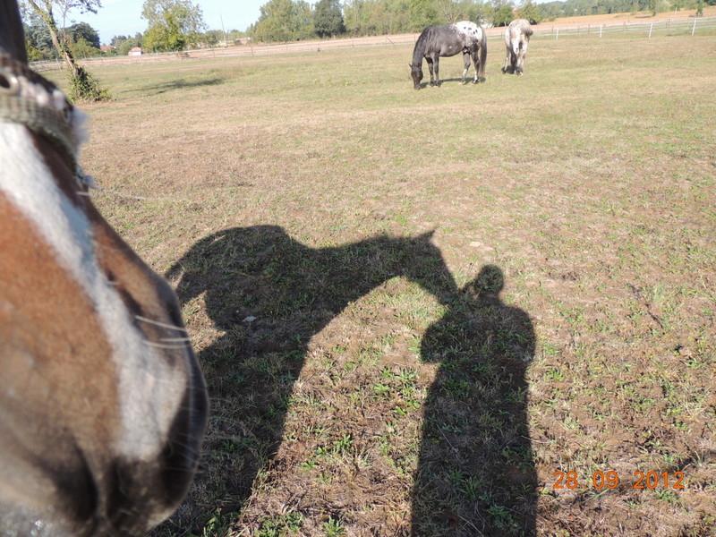 Mes chevaux, un mélange d'un peu tout le monde! Groupa15