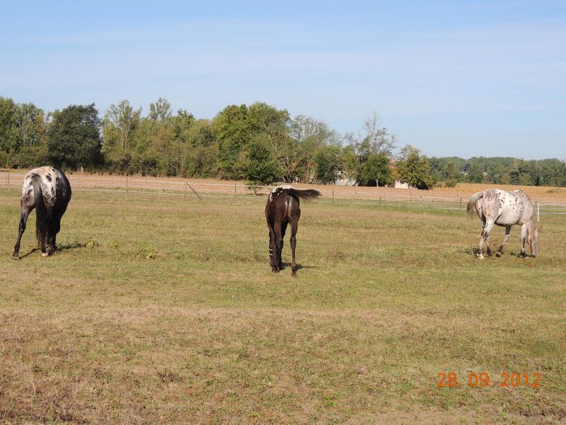 Mes chevaux, un mélange d'un peu tout le monde! Groupa16
