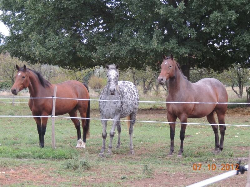 Mes chevaux, un mélange d'un peu tout le monde! Groupa19