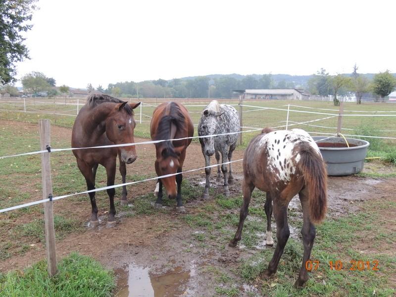 Mes chevaux, un mélange d'un peu tout le monde! Groupa21