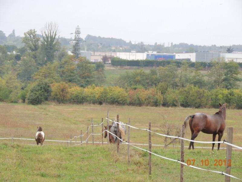 Mes chevaux, un mélange d'un peu tout le monde! Groupa23