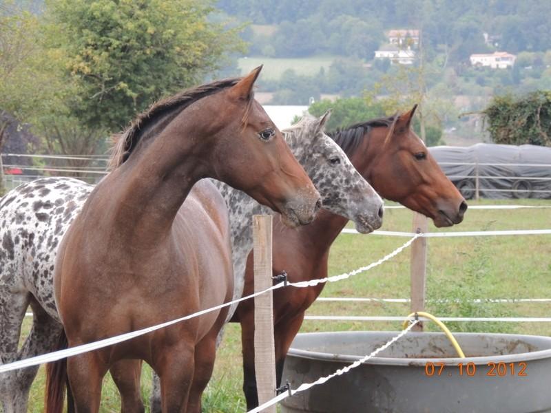 Mes chevaux, un mélange d'un peu tout le monde! Groupa24