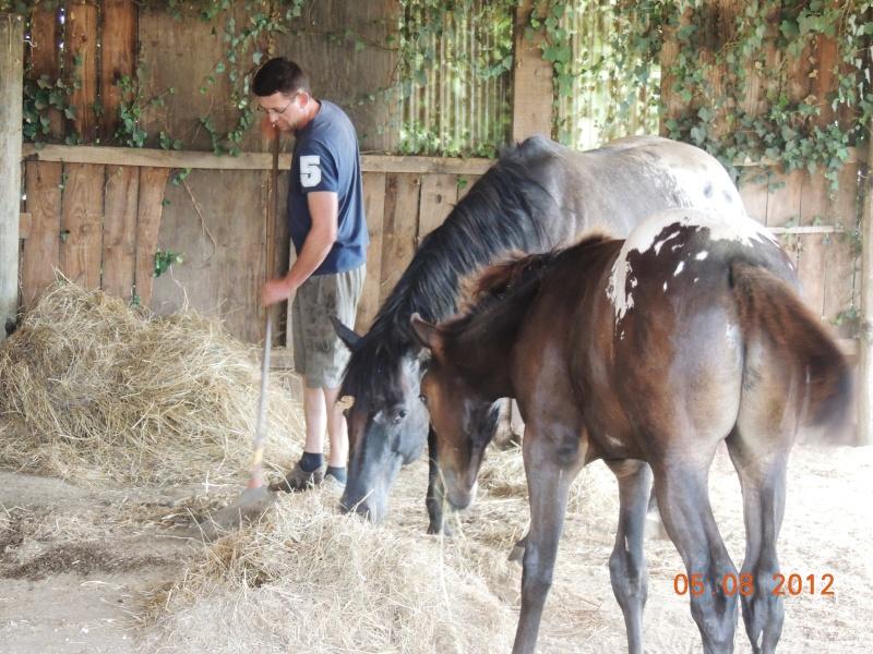 Mes chevaux, un mélange d'un peu tout le monde! Jacque10