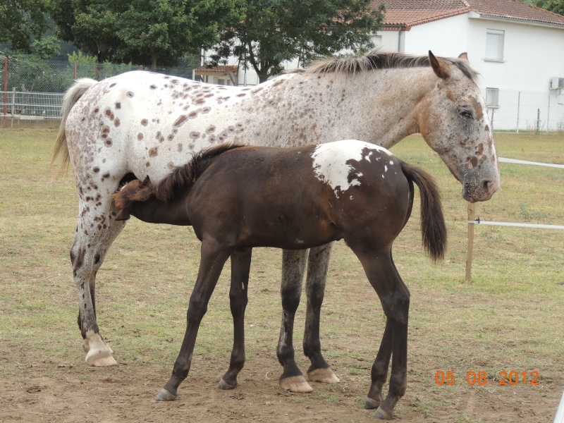 Mes chevaux, un mélange d'un peu tout le monde! Quarin10