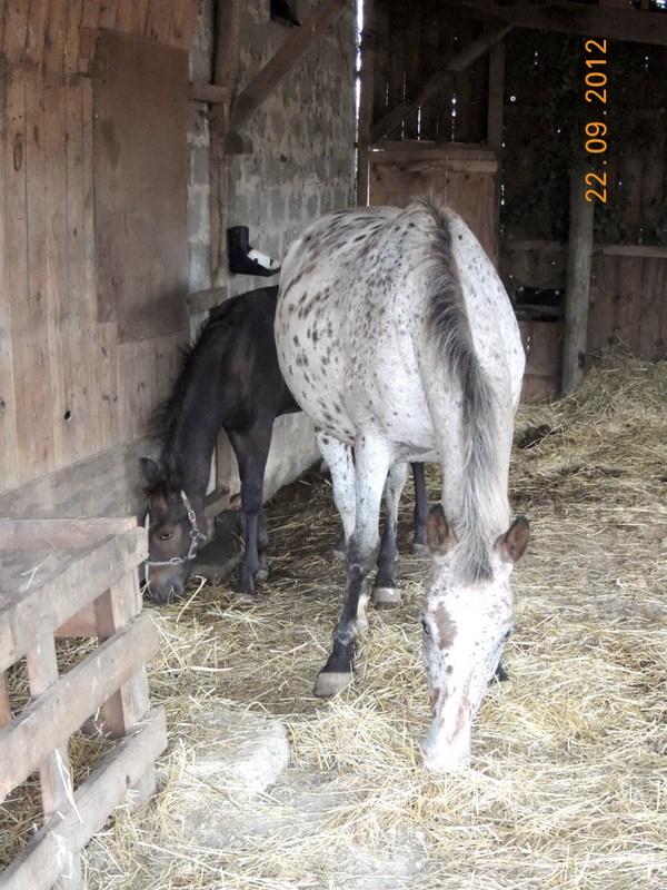 Mes chevaux, un mélange d'un peu tout le monde! Quarin19