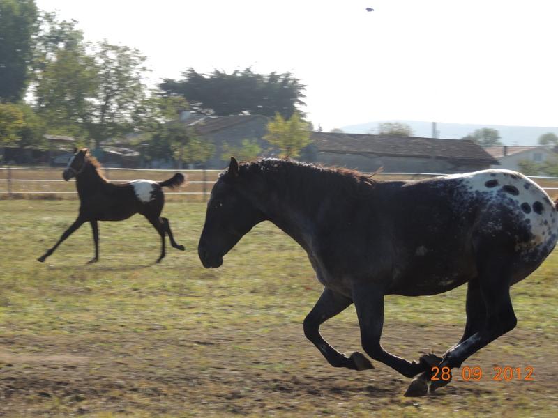 Mes chevaux, un mélange d'un peu tout le monde! Undy_e10
