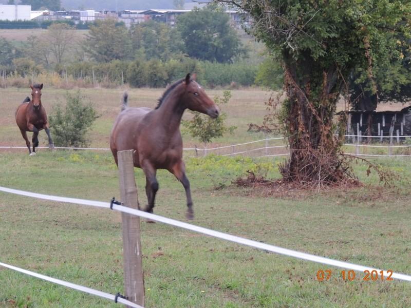 Mes chevaux, un mélange d'un peu tout le monde! Uppy_e10