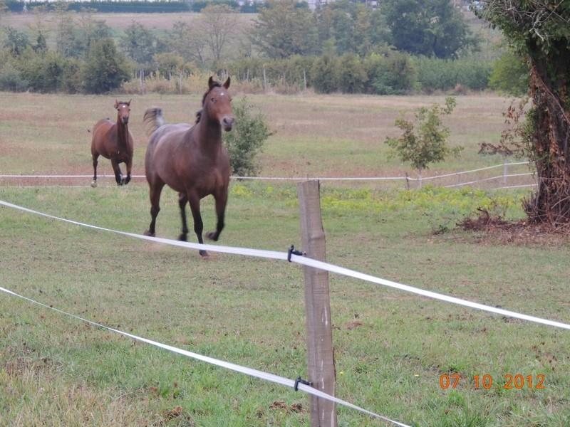 Mes chevaux, un mélange d'un peu tout le monde! Uppy_e11