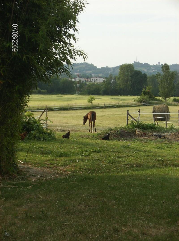 CONCOURS PHOTOS : Chevaux et nature.... Vinka_10