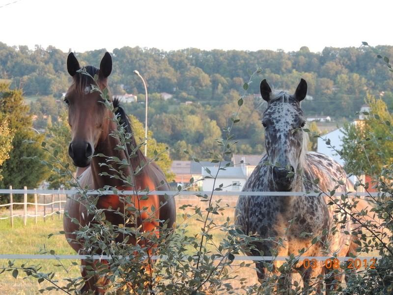 Mes chevaux, un mélange d'un peu tout le monde! Vinka_11