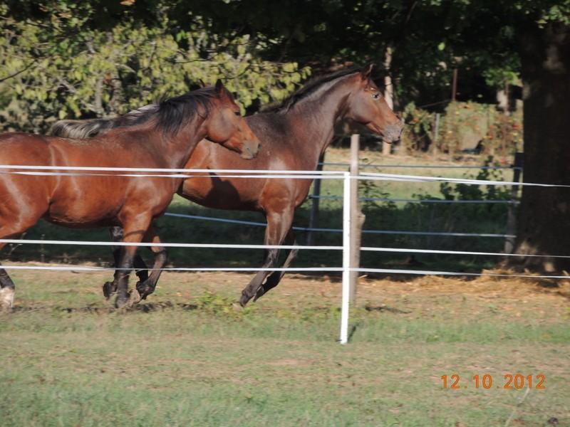 Mes chevaux, un mélange d'un peu tout le monde! Vinka_12