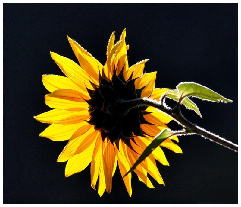 Soleil d'automne Soleil11