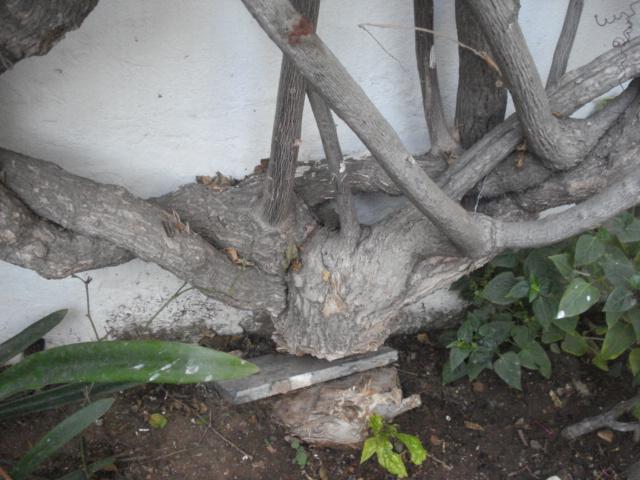 Même coupée,les plantes s accrochent à la vie Bougai10