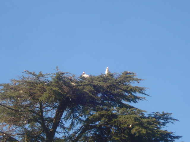 Jardin de Tropicana : Maroc /Casablanca - Page 2 Cigogn11