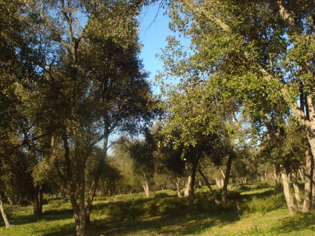 Jardin de Tropicana : Maroc /Casablanca - Page 2 Foret_10