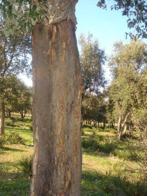 Jardin de Tropicana : Maroc /Casablanca - Page 2 Liage_10