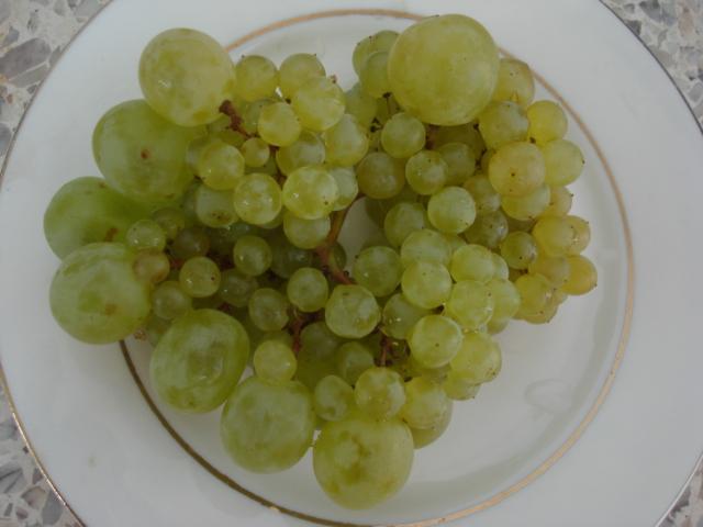Du raisin pour tous les ages Raisin11